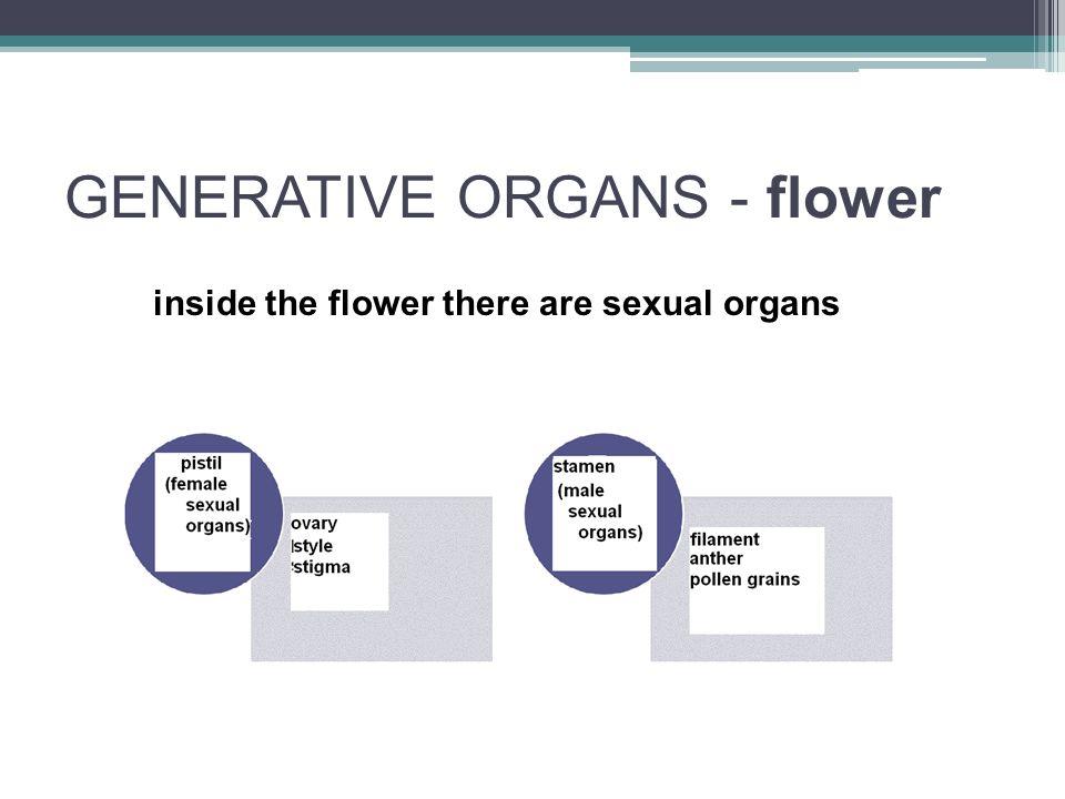 GENERATIVE ORGANS - flower