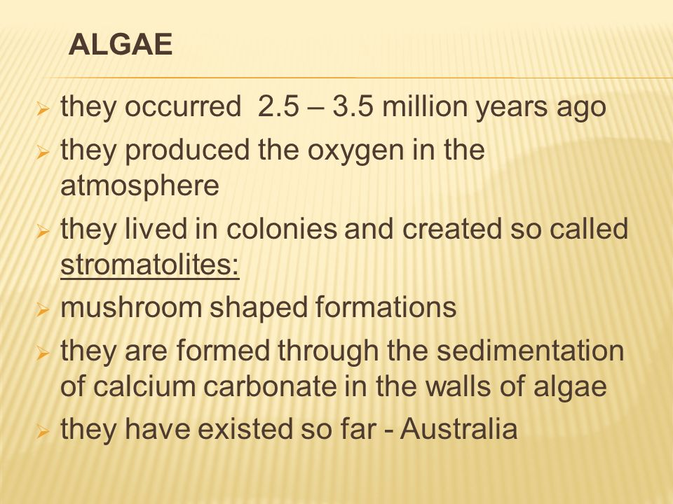  they occurred 2.5 – 3.5 million years ago  they produced the oxygen in the atmosphere  they lived in colonies and created so called stromatolites:  mushroom shaped formations  they are formed through the sedimentation of calcium carbonate in the walls of algae  they have existed so far - Australia ALGAE
