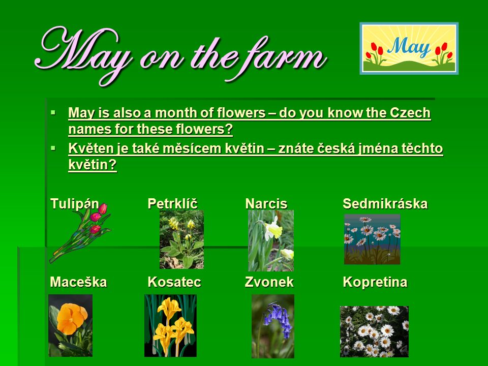 May on the farm  May is also a month of flowers – do you know the Czech names for these flowers.