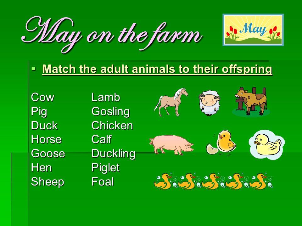 May on the farm  Match the adult animals to their offspring CowLamb PigGosling DuckChicken HorseCalf GooseDuckling HenPiglet SheepFoal