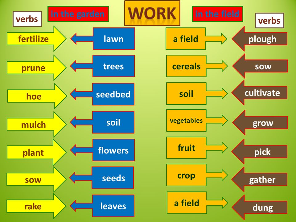 in the garden fertilize prune hoe mulch plant sow rake plough grow pick gather dung sow cultivate in the field lawn trees seedbed soil flowers seeds leaves a field cereals soil vegetables fruit crop a field verbs