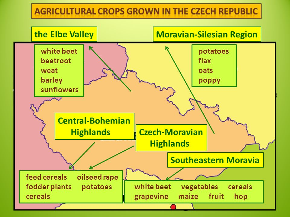 the Elbe Valley Moravian-Silesian Region white beet beetroot weat barley sunflowers potatoes flax oats poppy Central-Bohemian Highlands Czech-Moravian Highlands Southeastern Moravia feed cereals oilseed rape fodder plants potatoes cereals white beet vegetables cereals grapevine maize fruit hop