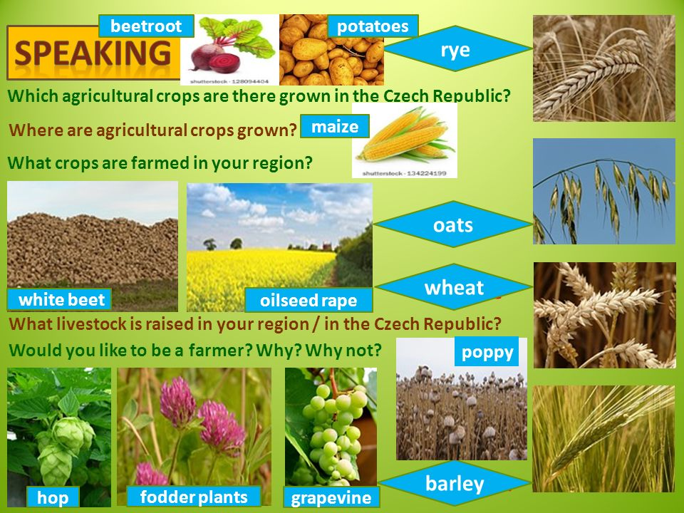 Which agricultural crops are there grown in the Czech Republic.