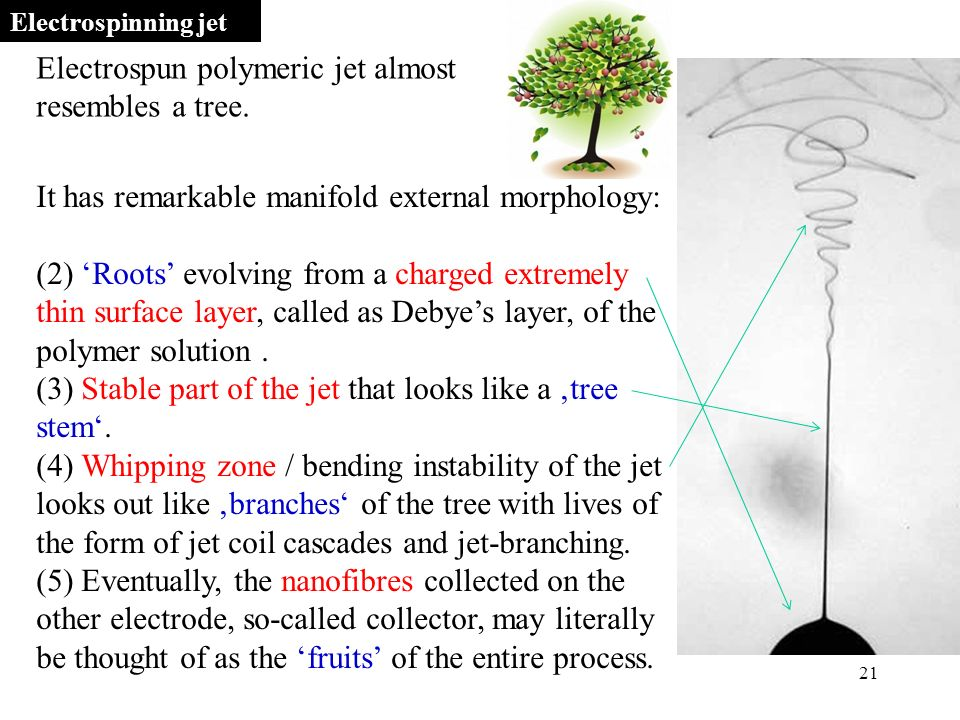 21 It has remarkable manifold external morphology: (2) 'Roots' evolving from a charged extremely thin surface layer, called as Debye's layer, of the polymer solution.