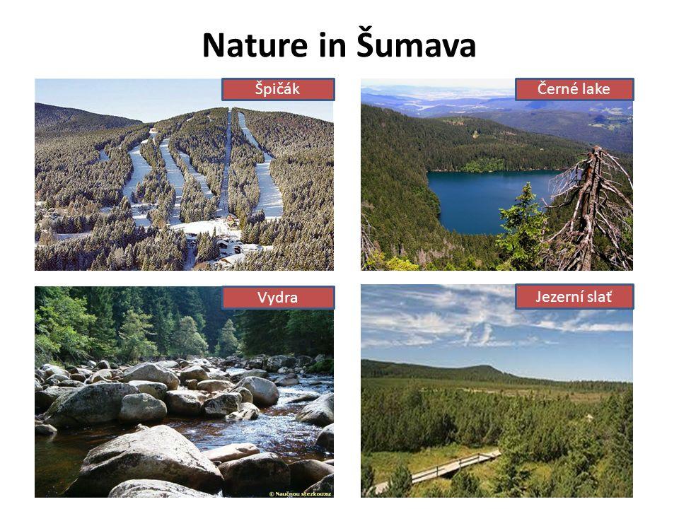 Nature in Šumava ŠpičákČerné lake Vydra Jezerní slať