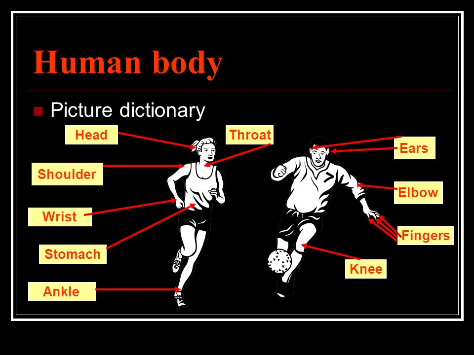 Human body What part of human body rhymes with: 1) Bed 2) List 3) Key 4) Goat 5) Beers 6) Colder