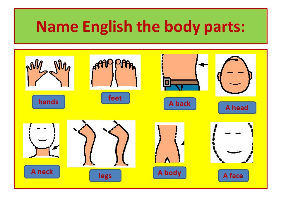 Name English the body parts: hands feet A back A head A neck legs A body A face