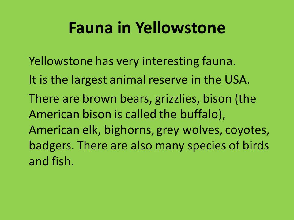 Fauna in Yellowstone Yellowstone has very interesting fauna.