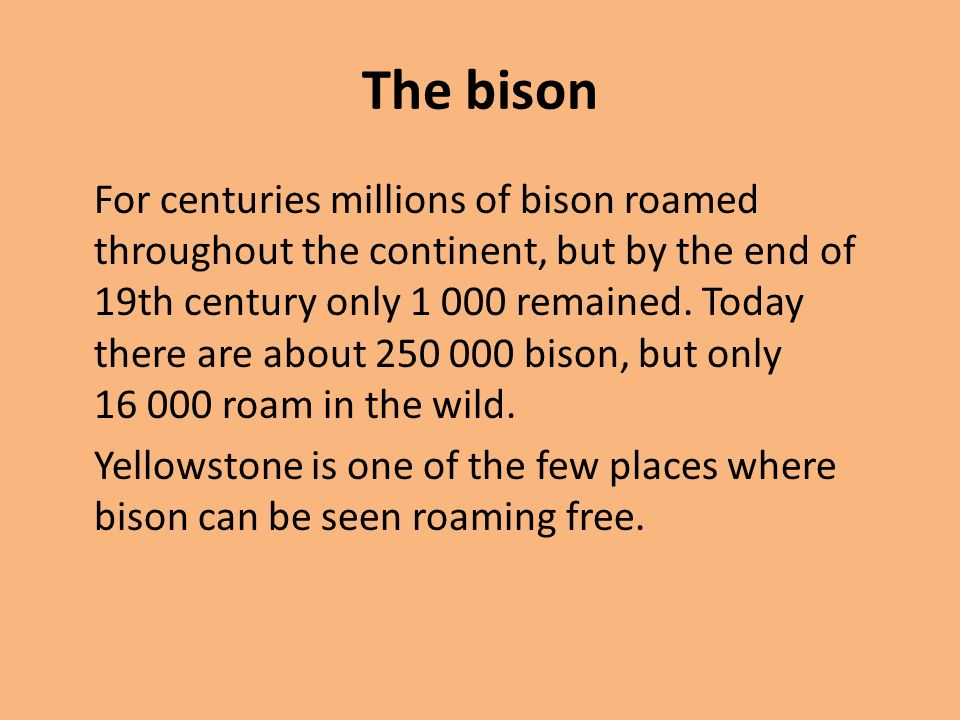 The bison For centuries millions of bison roamed throughout the continent, but by the end of 19th century only 1 000 remained. Today there are about 2