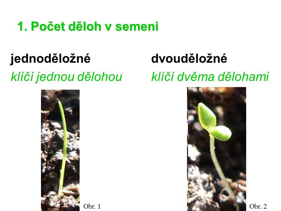 1. Počet děloh v semeni jednoděložné dvouděložné klíčí jednou dělohouklíčí dvěma dělohami Obr. 1Obr. 2