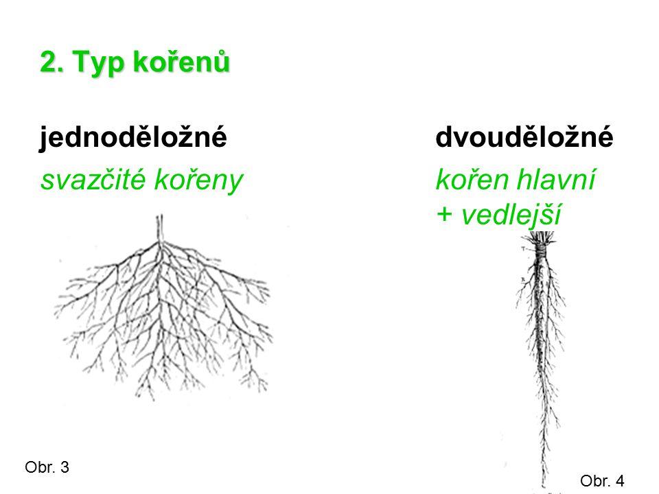 2. Typ kořenů jednoděložnédvouděložné svazčité kořenykořen hlavní + vedlejší Obr. 3 Obr. 4