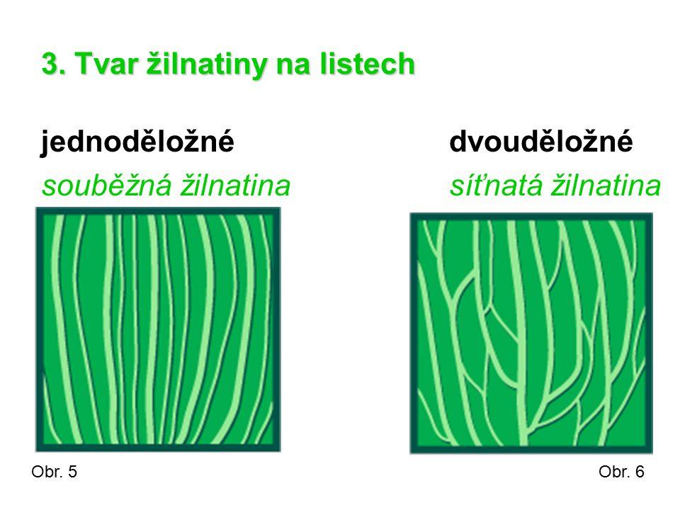 3. Tvar žilnatiny na listech jednoděložnédvouděložné souběžná žilnatinasíťnatá žilnatina Obr. 5Obr. 6