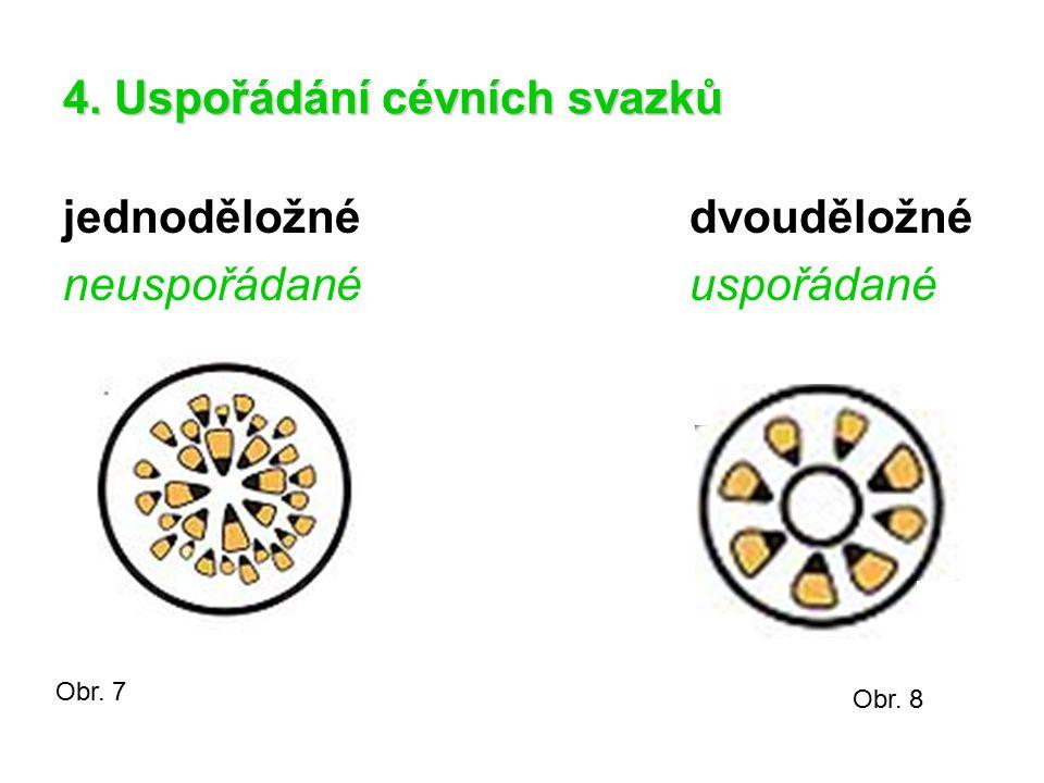 4. Uspořádání cévních svazků jednoděložnédvouděložné neuspořádanéuspořádané Obr. 7 Obr. 8