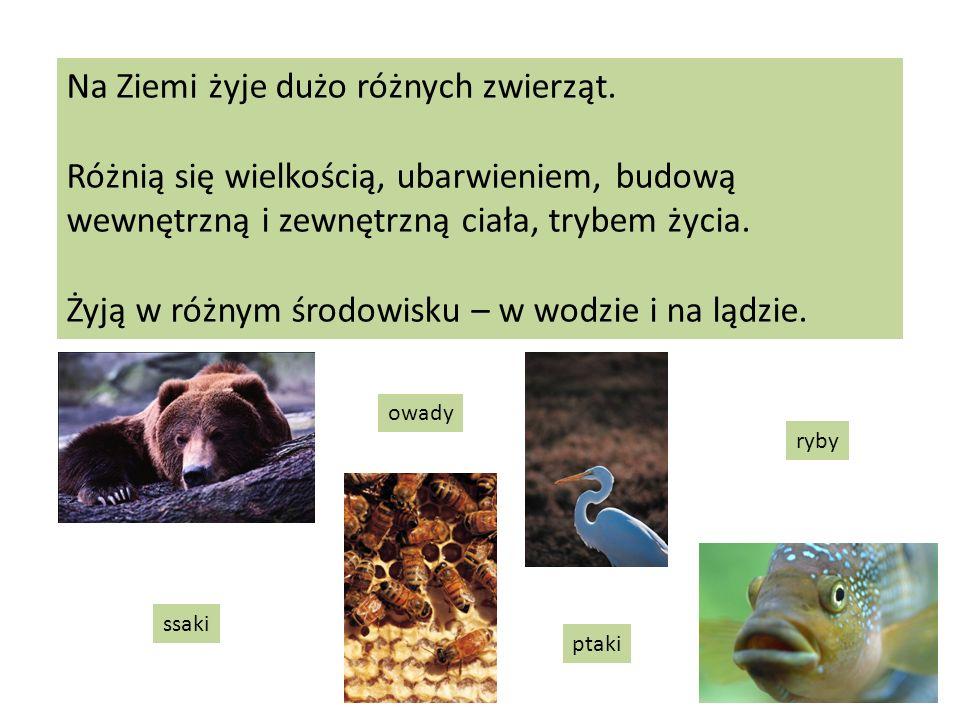 Na Ziemi żyje dużo różnych zwierząt. Różnią się wielkością, ubarwieniem, budową wewnętrzną i zewnętrzną ciała, trybem życia. Żyją w różnym środowisku