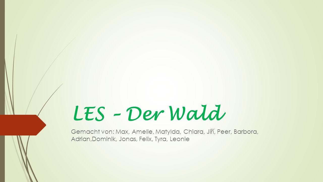LES – Der Wald Gemacht von: Max, Amelie, Matylda, Chiara, Jiří, Peer, Barbora, Adrian,Dominik, Jonas, Felix, Tyra, Leonie