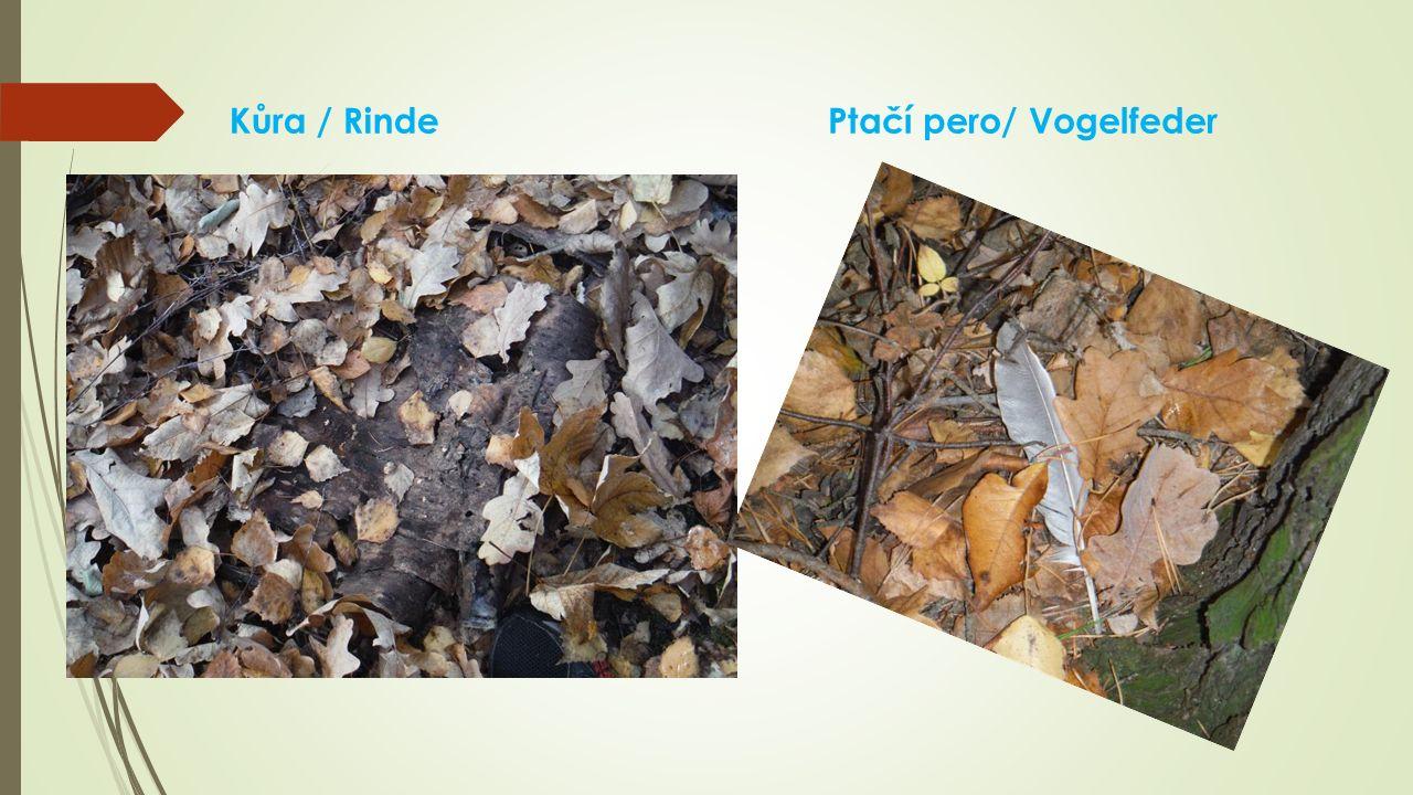 Kůra / RindePtačí pero/ Vogelfeder