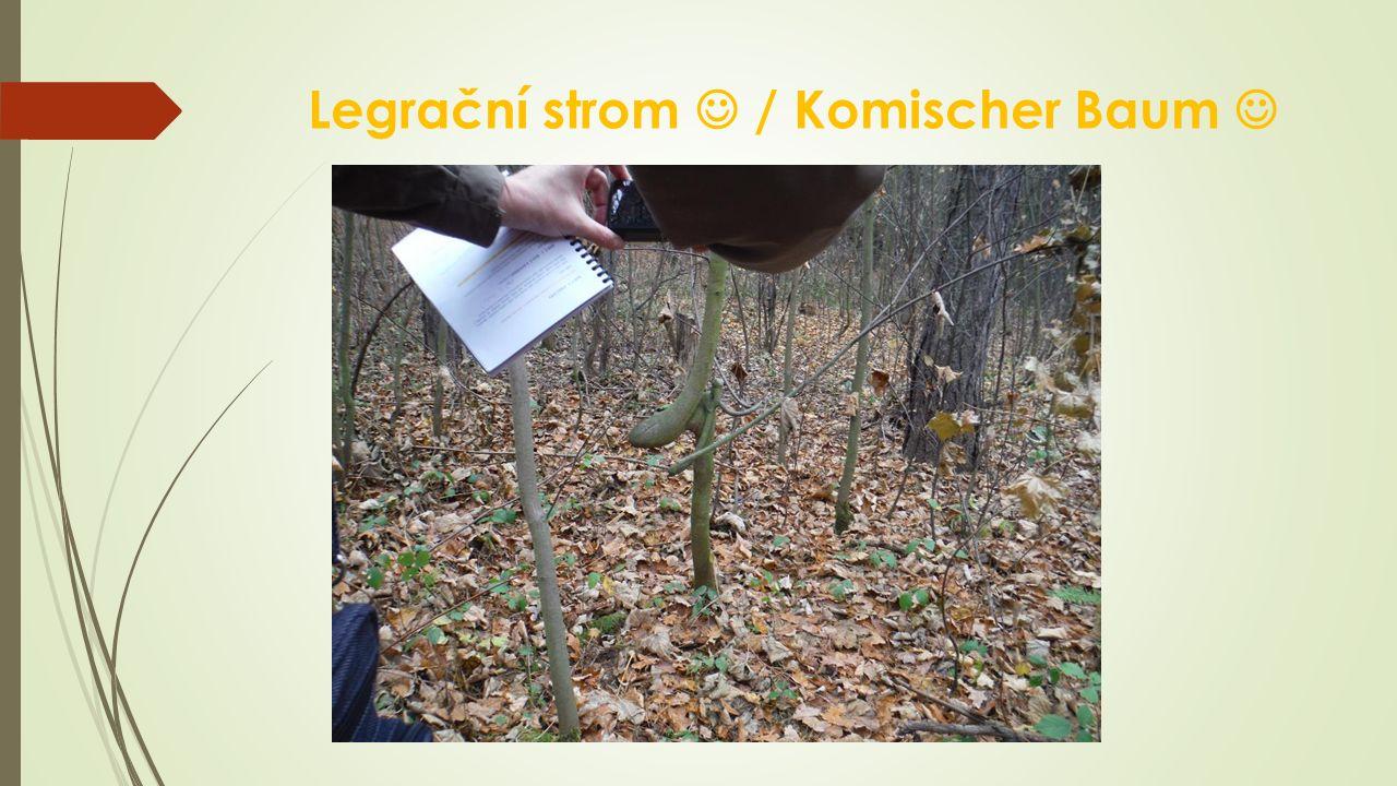 Legrační strom / Komischer Baum