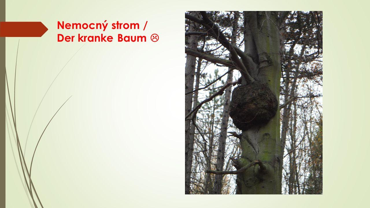 Nemocný strom / Der kranke Baum 