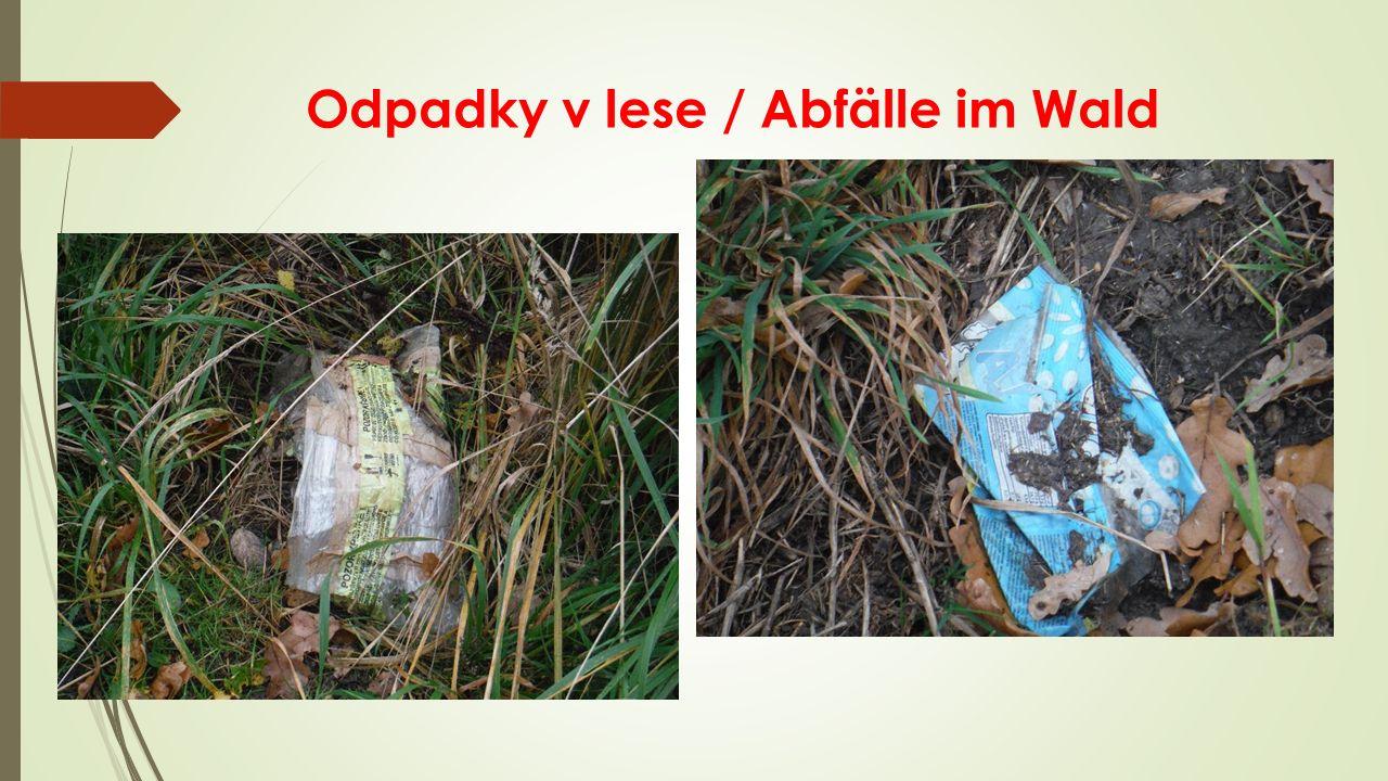Odpadky v lese / Abfälle im Wald