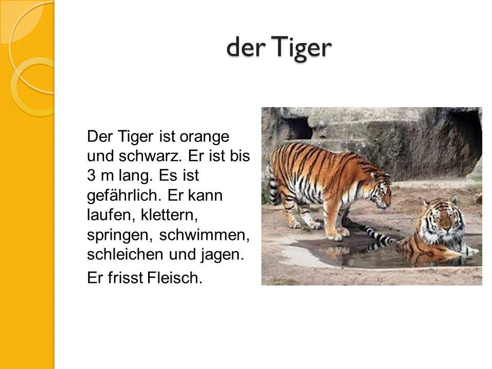 der Tiger Der Tiger ist orange und schwarz. Er ist bis 3 m lang.