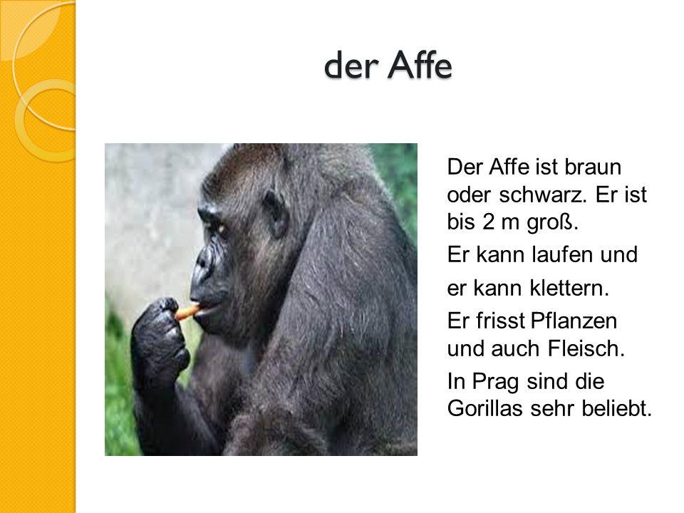 der Affe Der Affe ist braun oder schwarz. Er ist bis 2 m groß.