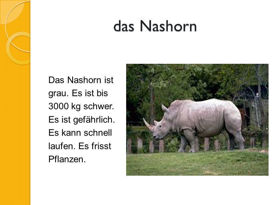 das Nashorn Das Nashorn ist grau. Es ist bis 3000 kg schwer.