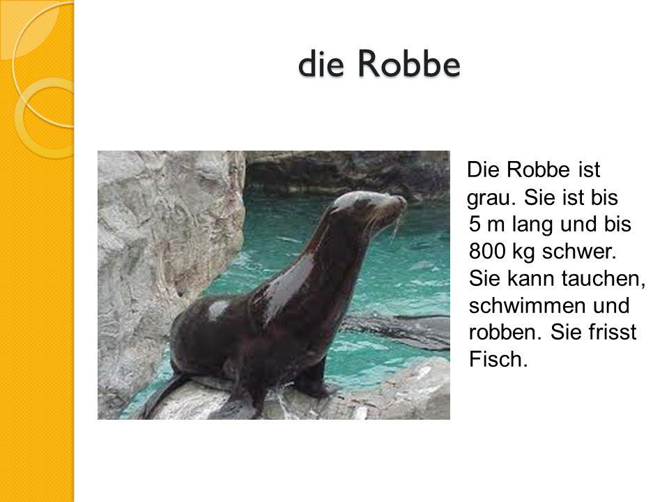 die Robbe Die Robbe ist grau. Sie ist bis 5 m lang und bis 800 kg schwer.
