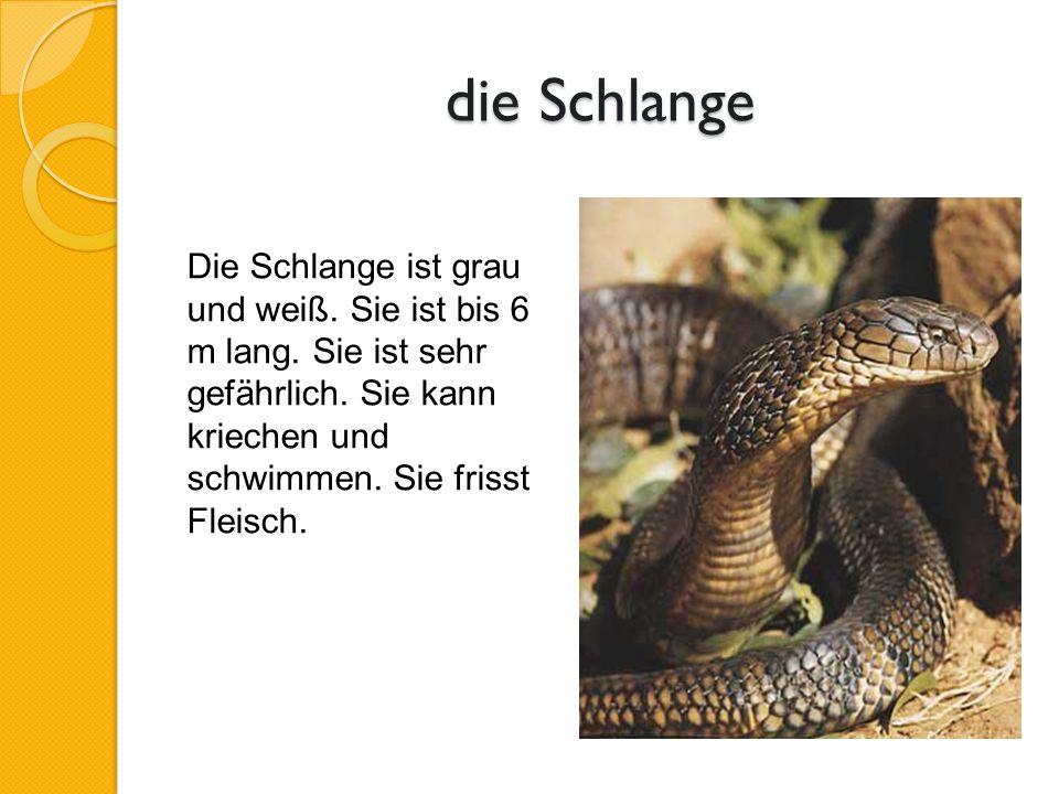 die Schlange Die Schlange ist grau und weiß. Sie ist bis 6 m lang.