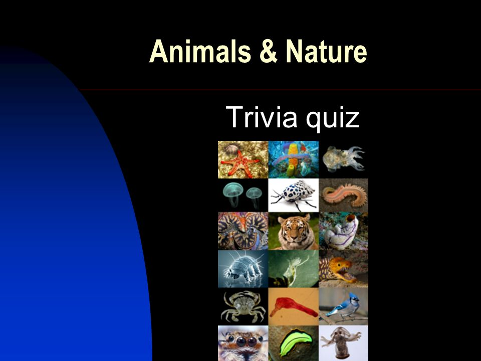 Animals & Nature Trivia quiz