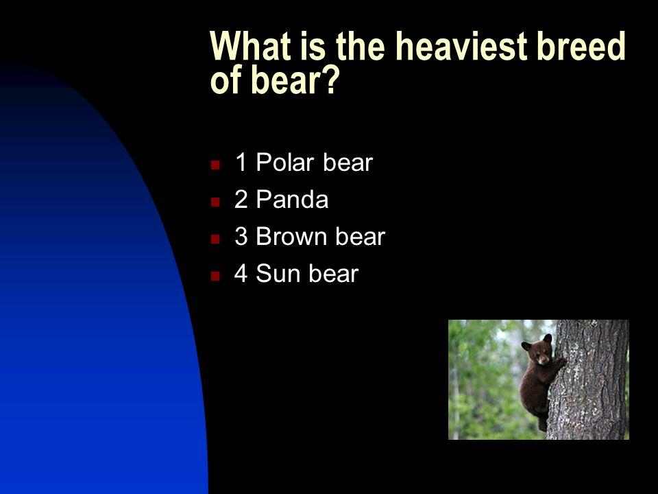 What s the longest-living land mammal after man? 1 Orangutan 2 Grizzly bear 3 Elephant 4 Horse