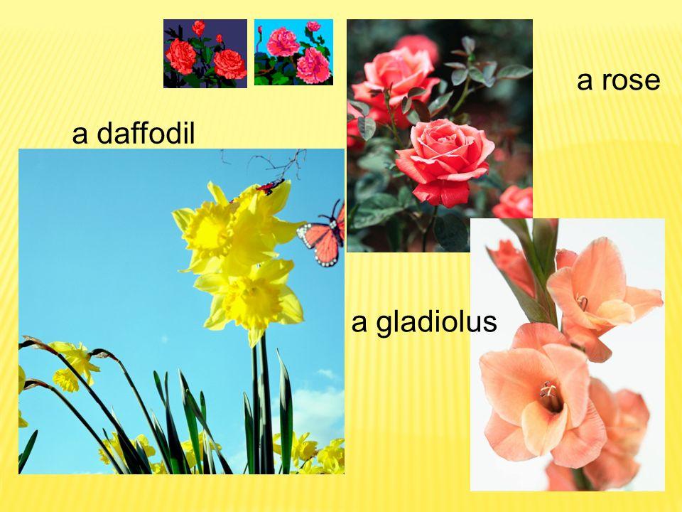 a rose a daffodil a gladiolus