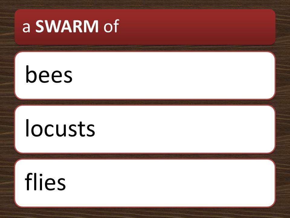 a SWARM of beeslocustsflies
