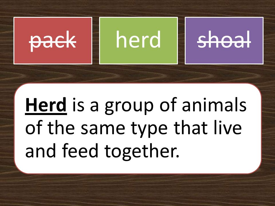 packherdshoal Herd is a group of animals of the same type that live and feed together.