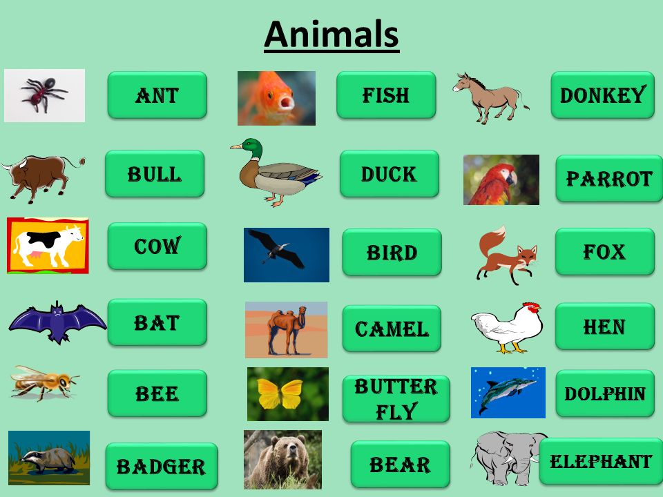 Animals ANT BULL COW BAT BEE BADGER FISH DUCK BIRD CAMEL BUTTER FLY BEAR DONKEY PARROT FOX HEN DOLPHIN ELEPHANT