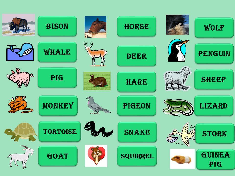 BISON WHALE PIG MONKEY TORTOISE GOAT HORSE DEER HARE PIGEON SNAKE SQUIRREL WOLF PENGUIN SHEEP LIZARD STORK GUINEA PIG GUINEA PIG