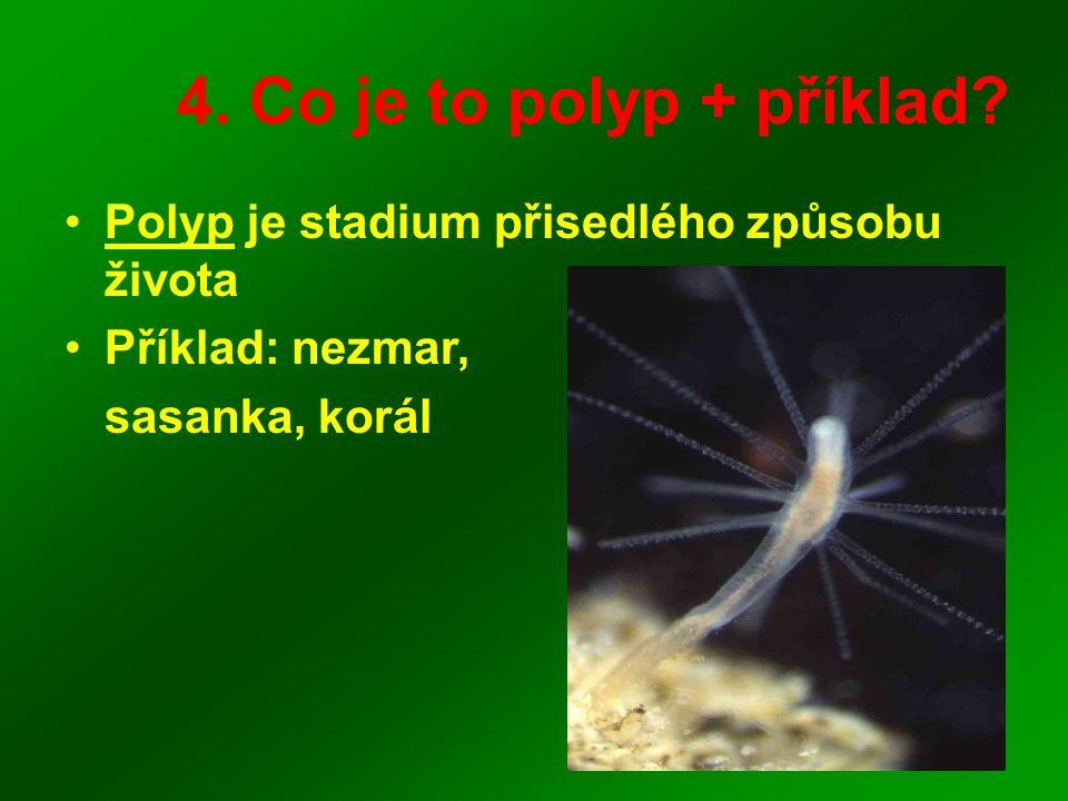 4. Co je to polyp + příklad? Polyp je stadium přisedlého způsobu života Příklad: nezmar, sasanka, korál