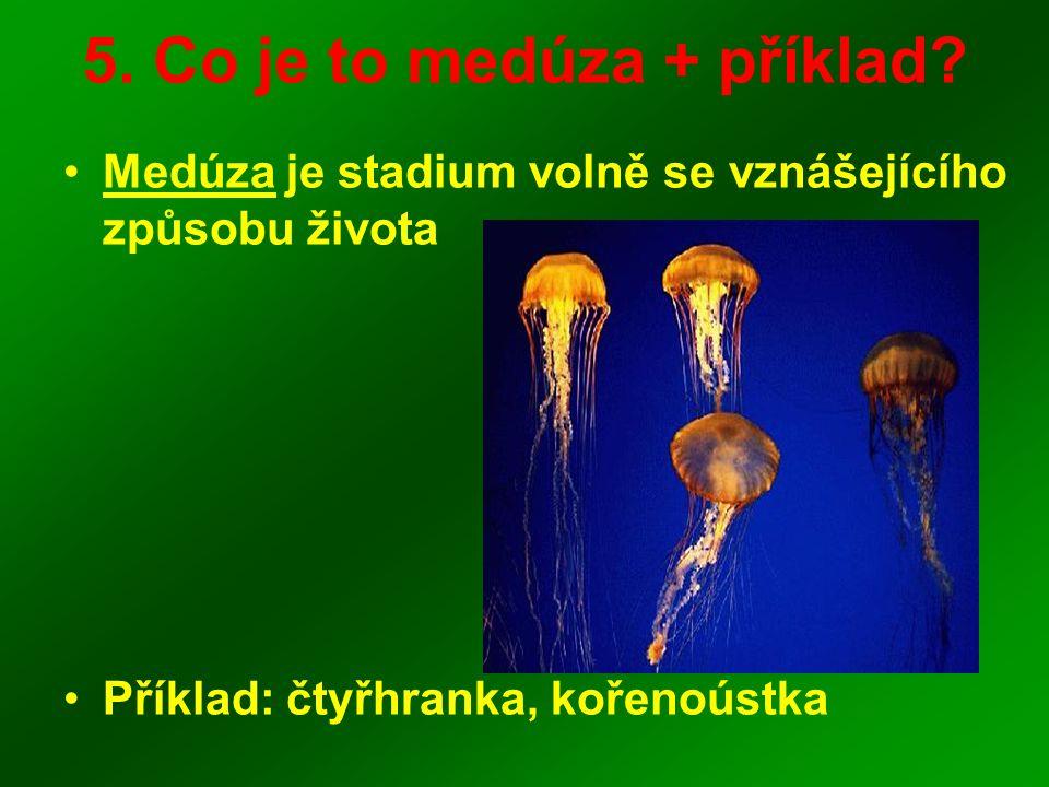 5. Co je to medúza + příklad? Medúza je stadium volně se vznášejícího způsobu života Příklad: čtyřhranka, kořenoústka