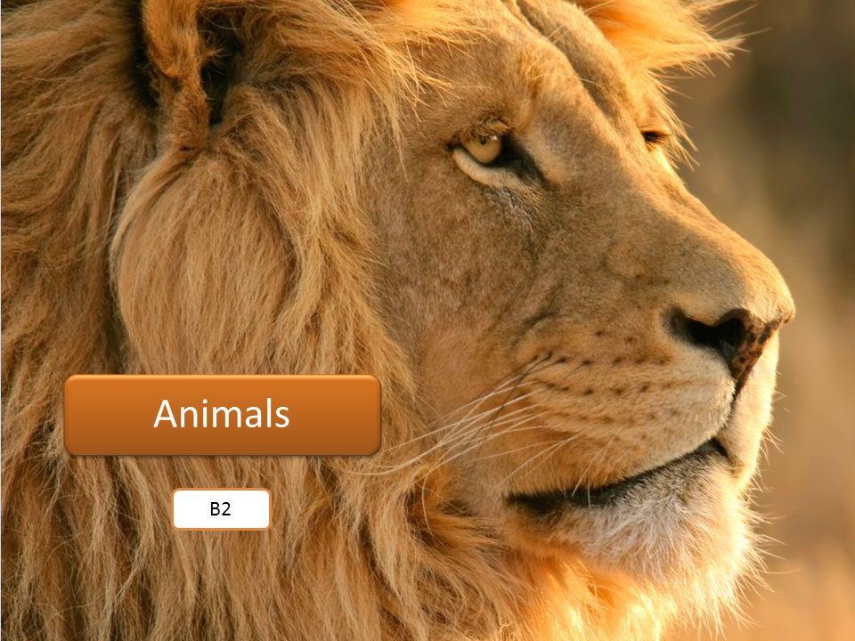 Animals B2