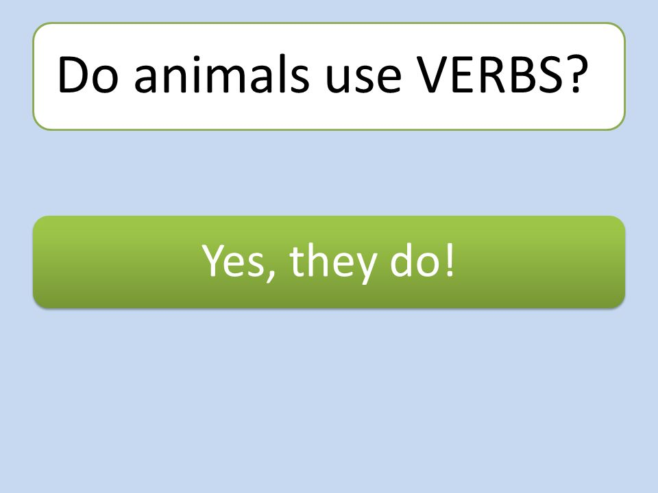 Do animals use VERBS Yes, they do!