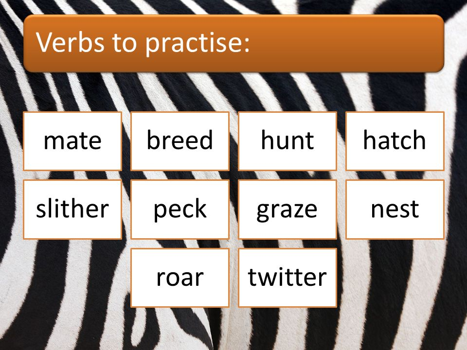 Which verbs are connected with birds? matebreedhunthatch slitherpeckgrazenest roartwitter
