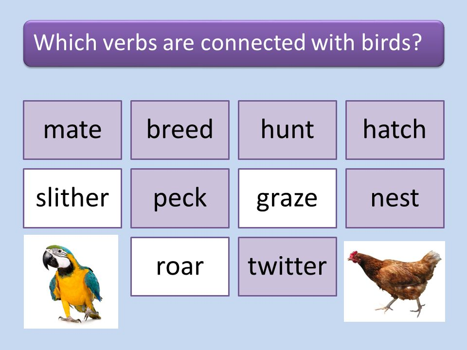 Can you use animals as VERBS? Yes, you can!