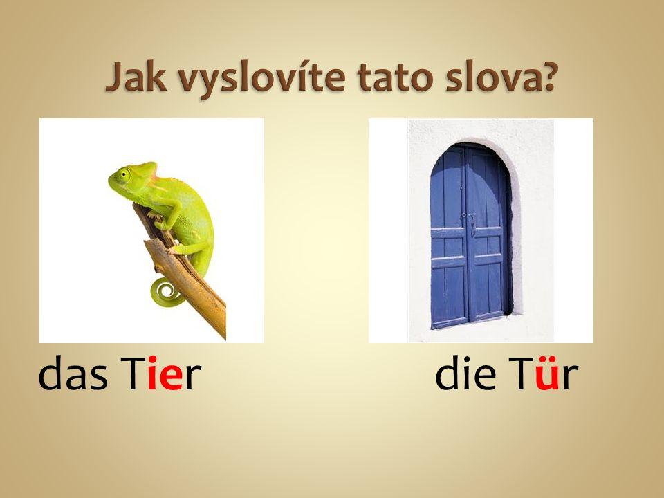 das Tier die Tür