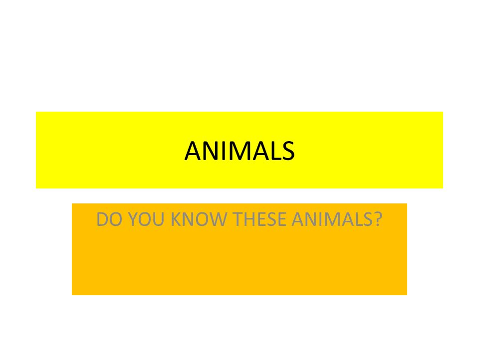 ANIMALS DO YOU KNOW THESE ANIMALS?