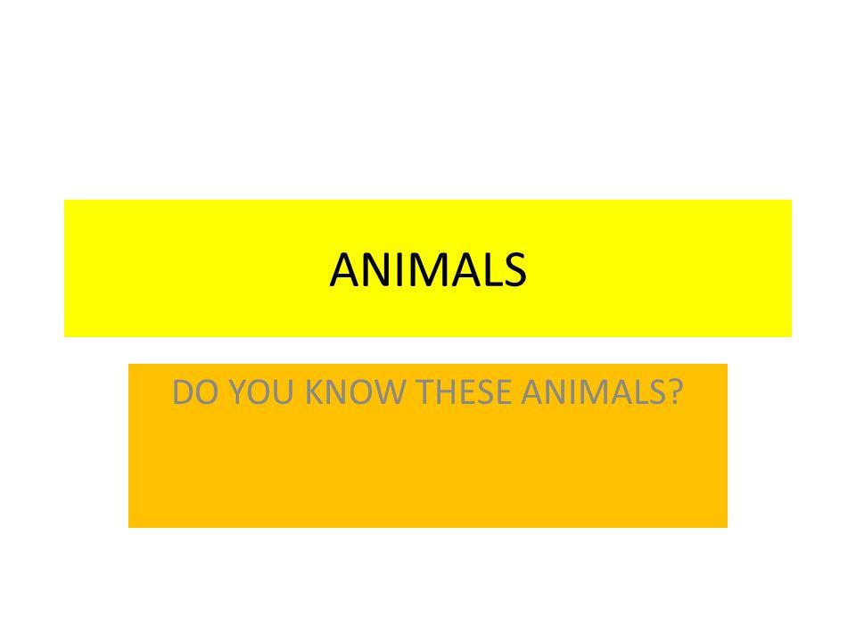 RIGHT ANSWERS BEAR DOLPHIN DUCK RABBIT HORSE