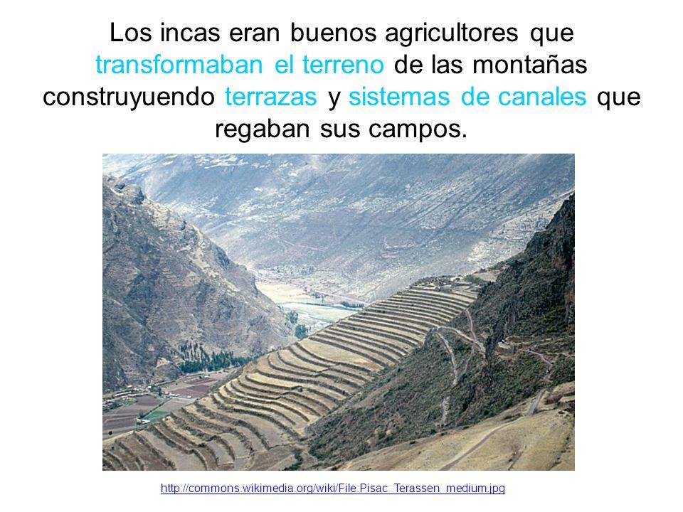 Los incas eran buenos agricultores que transformaban el terreno de las montañas construyuendo terrazas y sistemas de canales que regaban sus campos.