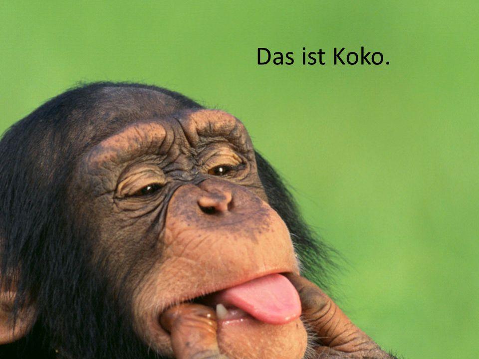 Koko turnt und relaxiert im Garten.