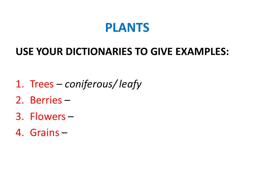 PLANTS USE YOUR DICTIONARIES TO GIVE EXAMPLES: 1.Trees – coniferous/ leafy 2.Berries – 3.Flowers – 4.Grains –