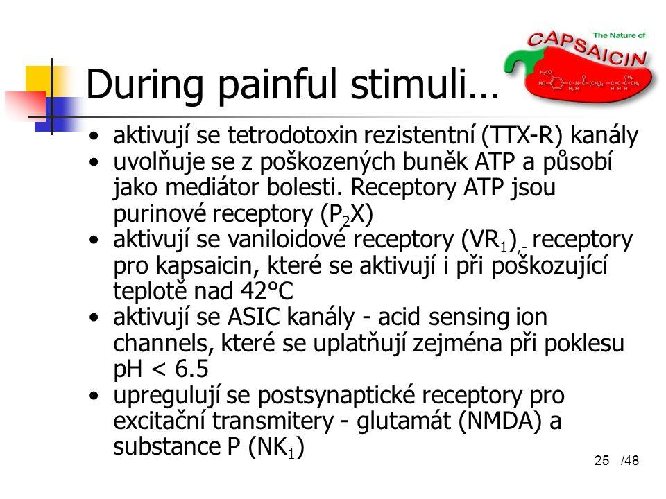 /4825 During painful stimuli… aktivují se tetrodotoxin rezistentní (TTX-R) kanály uvolňuje se z poškozených buněk ATP a působí jako mediátor bolesti.