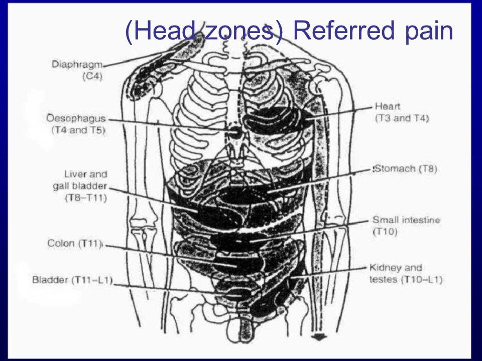 /4830 (Head zones) Referred pain
