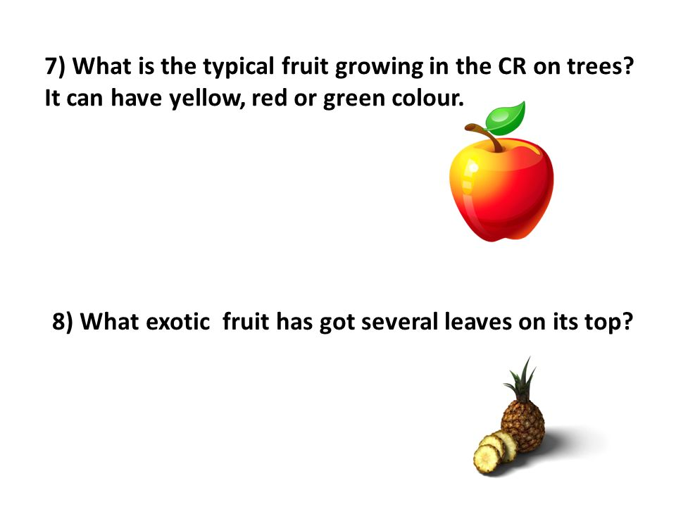 7) What is the typical fruit growing in the CR on trees.